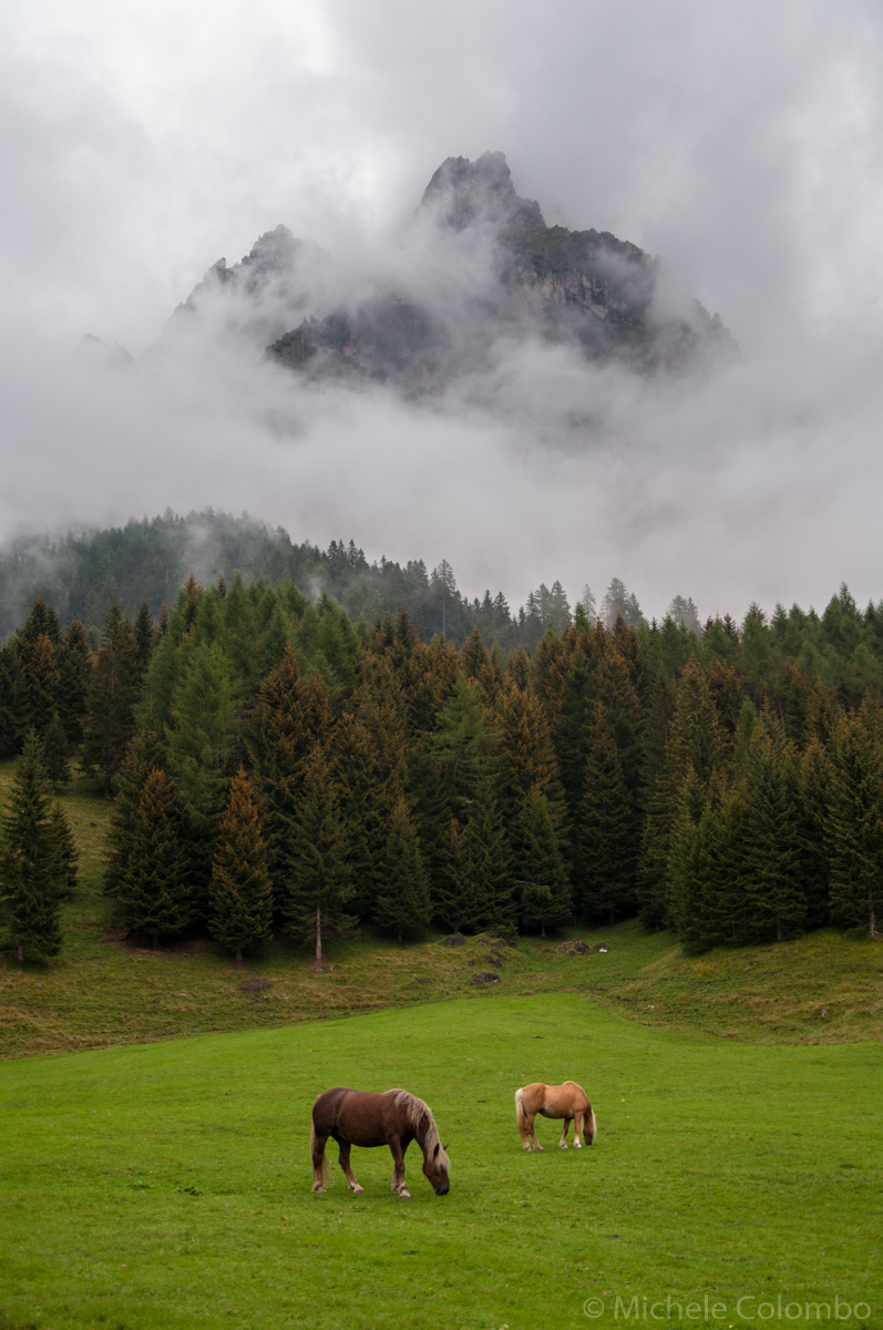 Mountain, wood and horses in a stormy day