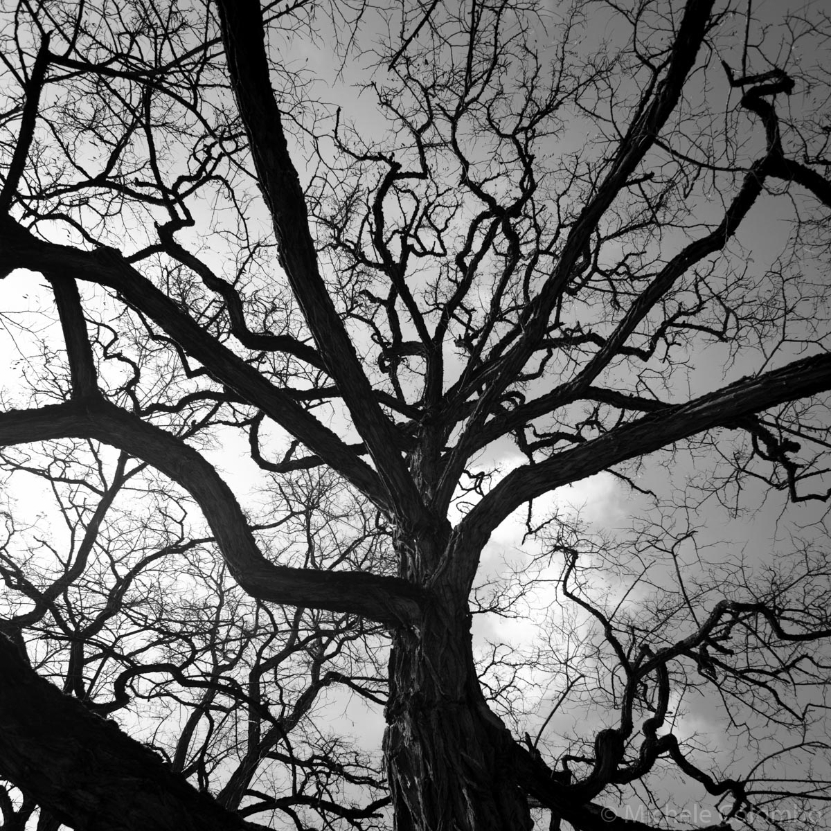 black and white silhouette of a tree
